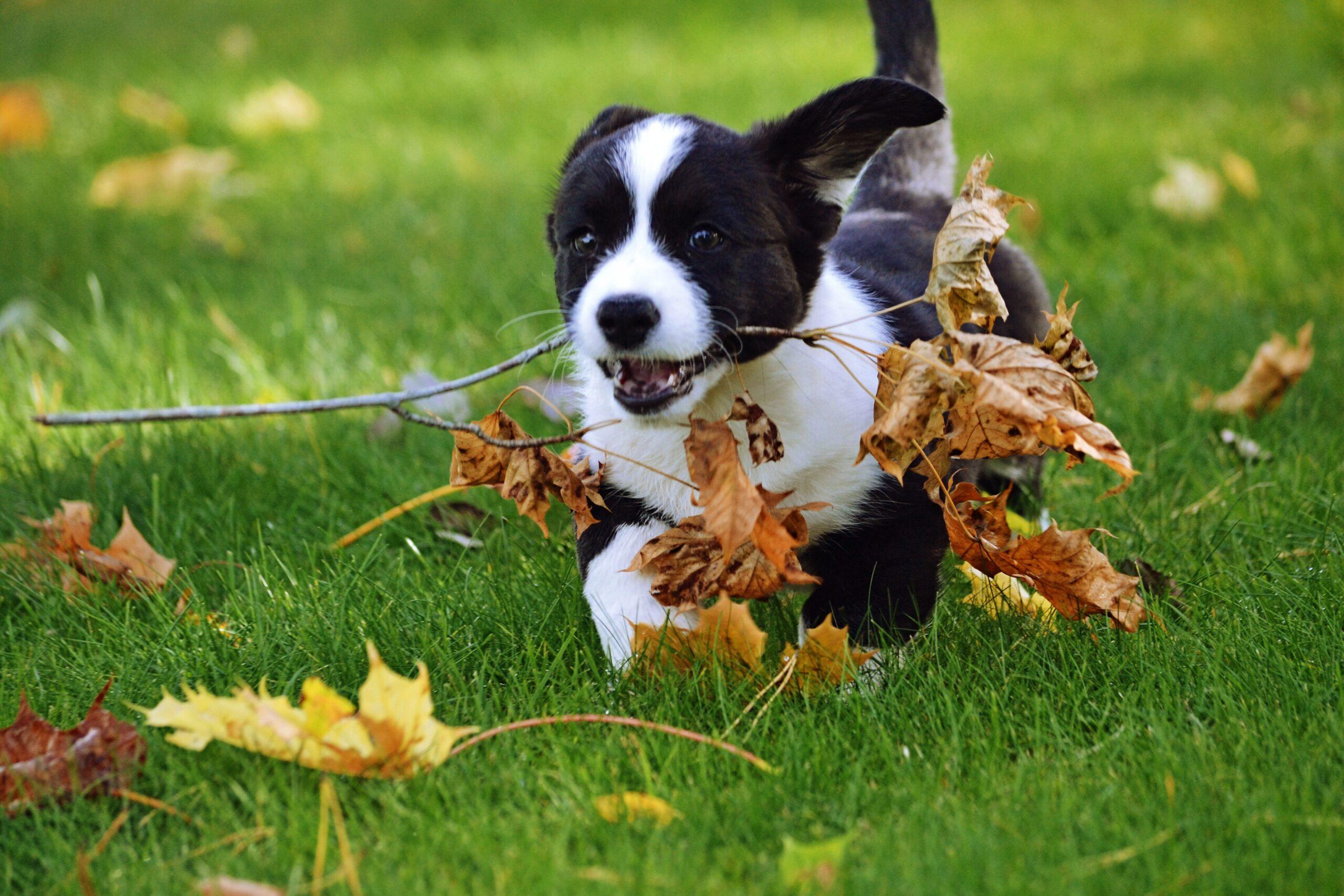 cane felice nella pensione