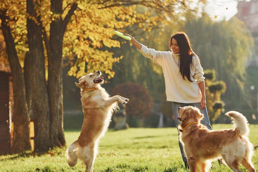 portare fuori il cane e giocare con il frisbee